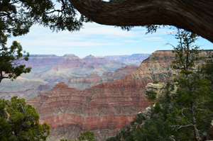 Nature Heals Grand Canyon