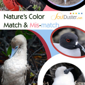Nature's Color Match or Mis-match