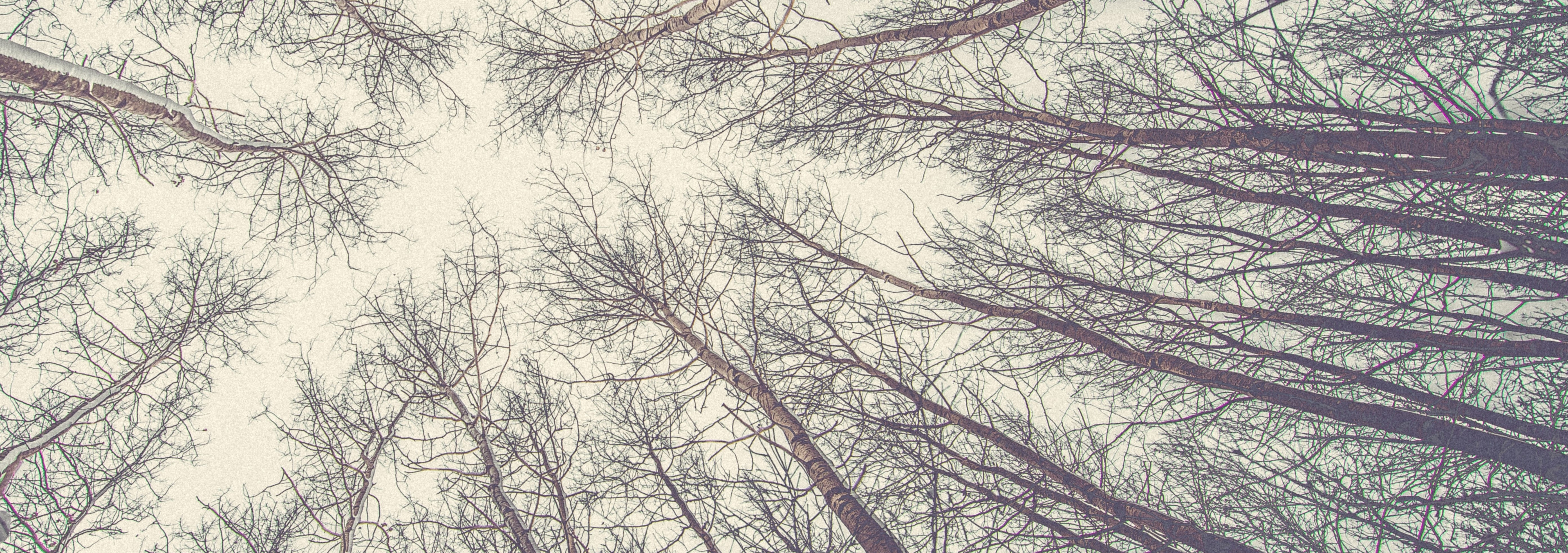 Art As Healing Trees